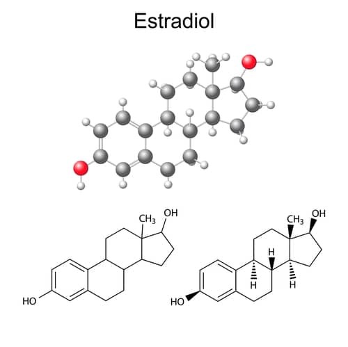 What does estradiol do? Estradiol is a critical chemical in both male and female bodies
